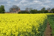 Rapeseed field near Routh