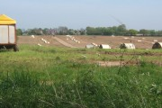 Large field of pigs west of the A140