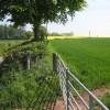 Field edge in spring sunshine