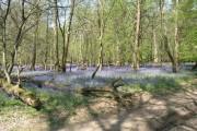 Spring on Aldbury Common