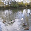Oswaldtwistle Mill Pond