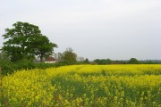 Farmland, Nuptown