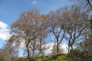Birchwoods, Clune