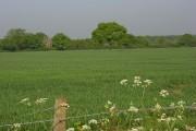 Farmland, Jealott's Hill