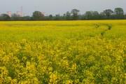 Farmland, Marcham
