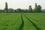 Farmland, Sutton Courtenay