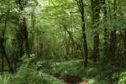 Footpath through woodland to Tintern