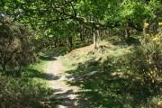 Walkhampton: bridleway in oak wood