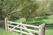 Birch Woods near Wester Craggan