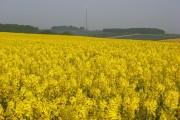 Farmland, Hannington