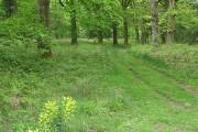 Mixed woodland near Blackpool Bridge