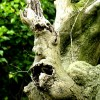 Face on a Branch?