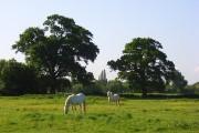 Horses, Hurst