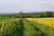 Track below Quarley Hill
