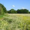 Farmland, Hurst