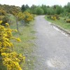 Gorse bushes and path