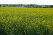 Farmland near Adisham