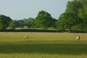 Pasture, Brereton