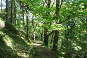 Sun-dappled path through Parc yr Ocar woods.