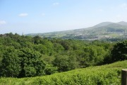 View over bracken covered slope towards Parc yr Ocar woods