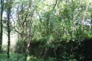 Coed Cilgeraint Woods