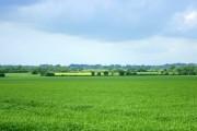 Farmland between Little Chalfield and Wraxall