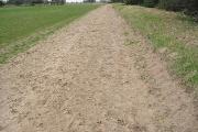 Turf farming on sandy soil