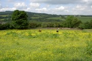 Colourful Fields near Llanfynydd.