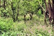 Bronington - Bubney Moor woods
