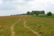 Farmland on East Ginge Down