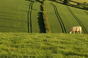 Fields above Windthorne