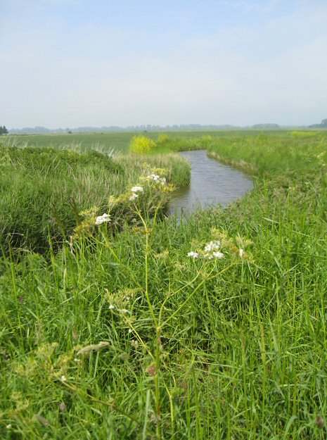 Butley Marshes