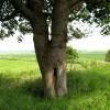 Unusual shaped tree