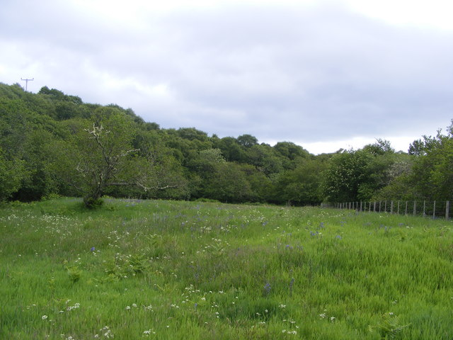 Meadow near Rearquhar