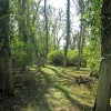 Spinney in Spring