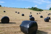 Wrapped bales, Higher Wraxall