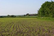 Farmland, Woodborough