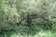 Damp woodland