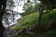 Wooded shoreline of Loch Fyne