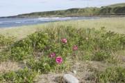 Nigg Bay flowers