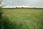 Towards Laneham from Broadings Lane