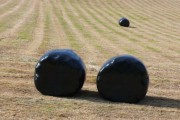 Wrapped hay bales. Higher Wraxall