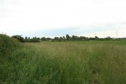 Farmland, Church Laneham (1)