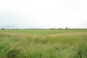 Farmland off Rampton Road