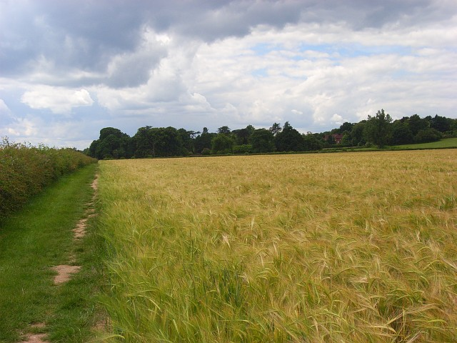 Barley and footpath near Pinkneys Green