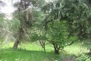 Woodland, Balnacoil