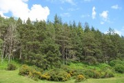 Woodland, Gordonbush