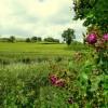 View to Aston Court Farm