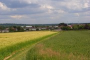 Wheat and barley, Maidenhead