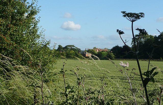 Farmland from the bridleway